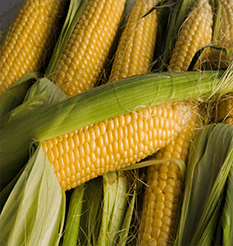 Summer corn-on-the-cob from Keil's Produce and Greenhouse in Swanton, Ohio