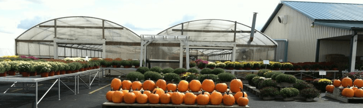 All sizes of pumpkins and the beautiful array of quality mums available from Keil's Produce and Greenhouse in Swanton Ohio