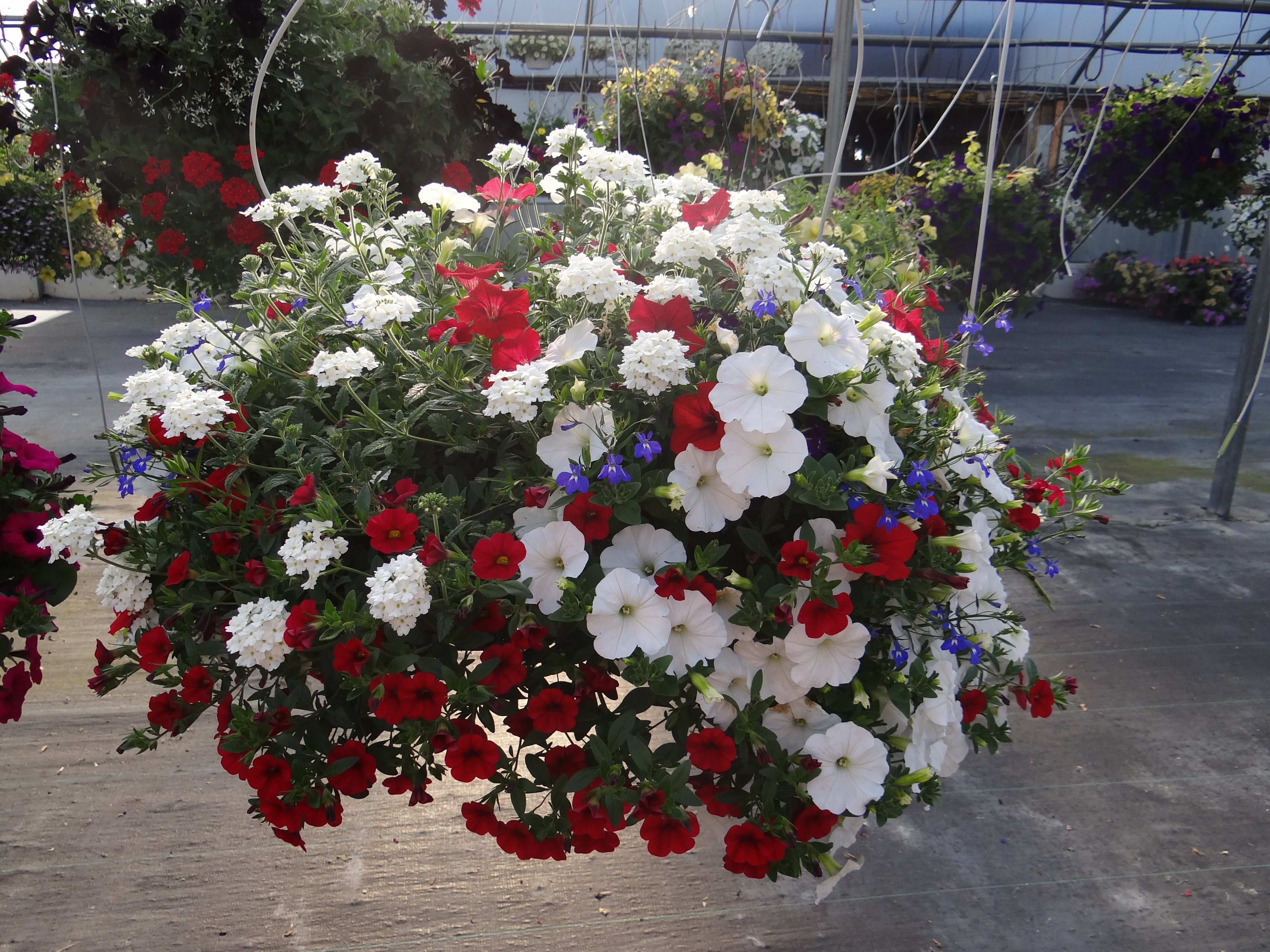 Our large flower baskets are loved by homeowners everywhere. These are available late April through mid-June at Keil's Produce and Greenhouse, just west of Toledo in Swanton.