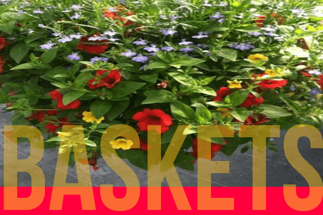 keils_produce_and_greenhouse_annual_flower_baskets.html