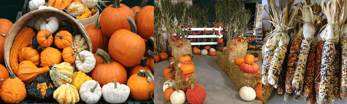Fall home decorating ideas and supplies, pumpkins, bales of straw, corn stalks, indian corn and more available at Keil's Produce and Greenhouse in Swanton