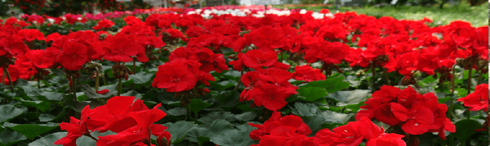 Keil S Produce And Greenhouse Toledo Annual Amp Perennial
